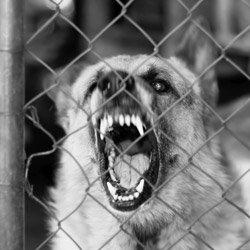 Dog Attack Attorney in Arizona