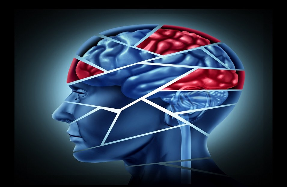Segments of the Brain