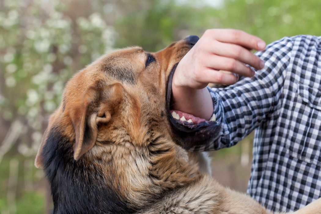 How To Get A Service Dog Without A Disability